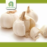 good brand natural garlic bulb the fresh garlic with low price