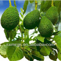 Clear Yellow Avocado Oil Essential Oil Bulk