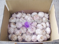 jinxiang fresh garlic price of 2013