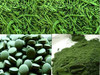 Wholesale organic certificated greenhouse produced chlorella vulgaris/chlorella powder/chlorella tablet