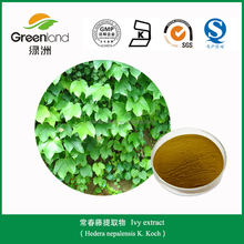 Plant extract ivy leaf with solvent extraction