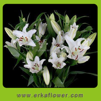 Hot selling fresh cut flowers colombia for wholesale