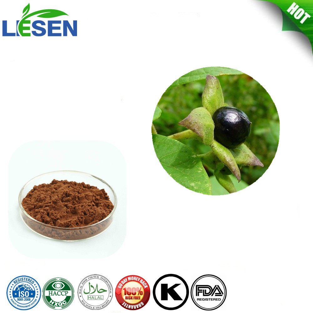 high quality 1% belladonna herb extract Hyoscyamine