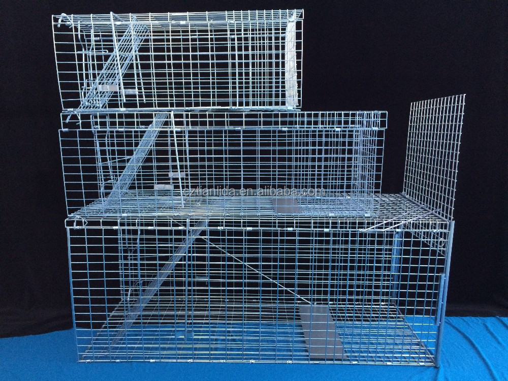 UK standard collapsible repeater pigeon trap cage for pigeons
