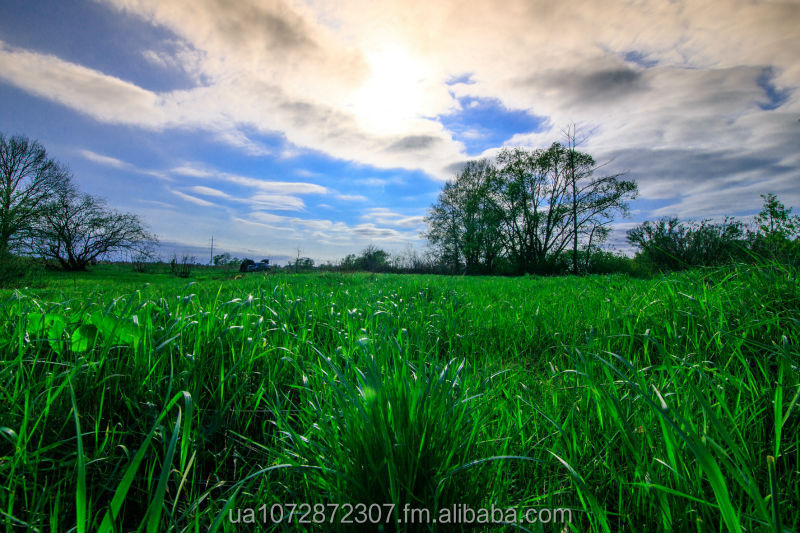 Agricultural land for sale in UKRAINE