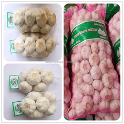 Jinxiang Fresh Garlic 500g/bag
