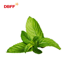 Mint Flavor For Wrigley Chewing Gum,beverage,Toothpaste