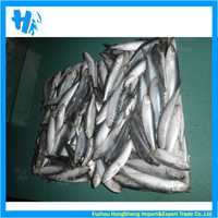 New arrival whole frozen sardine from China