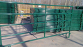 5Rails Painting Cattle Yard Panels