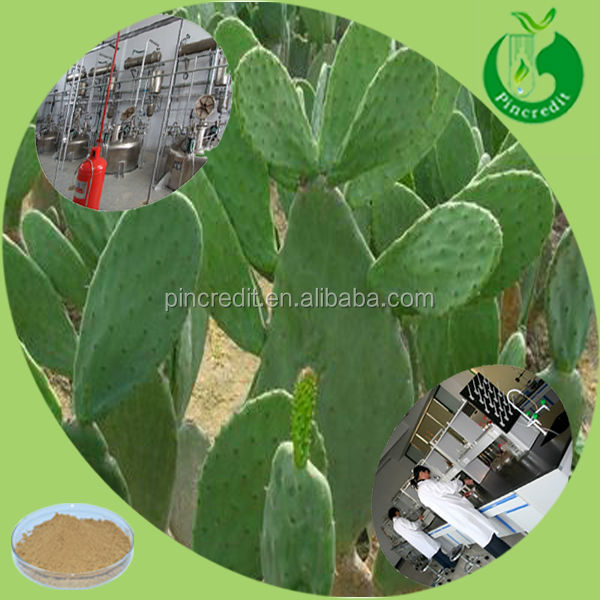 Chinese herbal natural cactus powder cactus extract