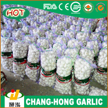 [HOT] China Garlic price
