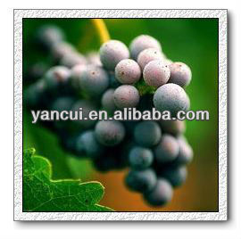 Grape Seed Extract (95%)