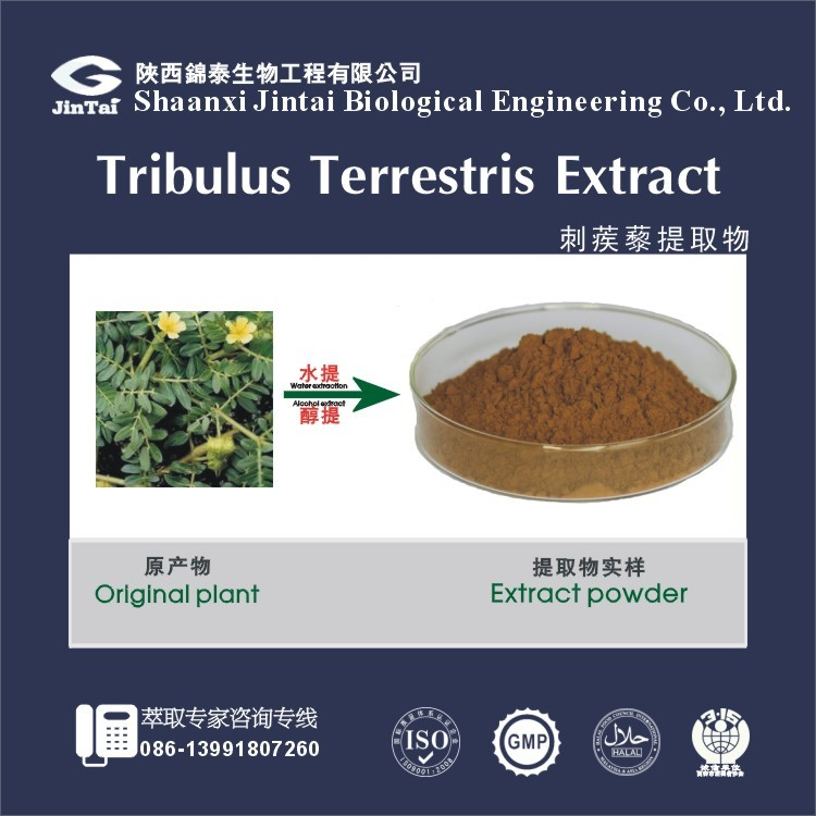 natural tribulus terrestris extract saponin 60% 80% 90%