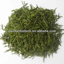 Green Tea Extract 98% polyphenols from GMP ISO HACCP certified manufacture