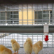 H type automatic baby chick cage with hot dipped galvanization