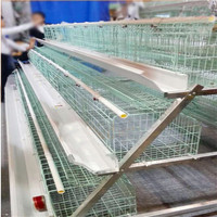 hen cage for sale in chennai / chicken cage with automatic system