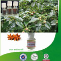 Natural & pure anise oil with superior quality, factory supply anise oil