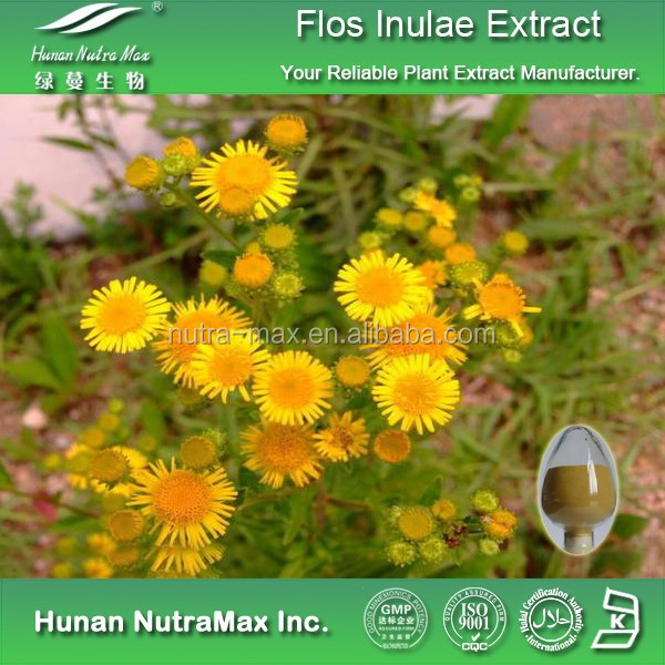 Flos Inulae Extract, Flos Inulae Powder Extract, Flos Inulae P.E.
