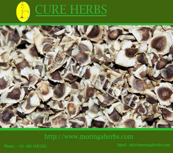 provider of PKM1 Moringa Tree seeds