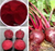 hot sales!hot cake! Beetroot Red Powder / betanin ( 100% natural colorant) with best price!