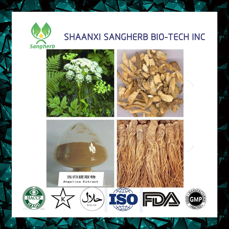 Factory supply Chinese angelica Extract/Chinese DongQuai Extract/DangGui extract