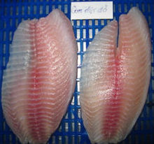 FRESH FROZEN TILAPIA WHOLE ROUND/ FILLET OF ALO SEAFOOD CO., LTD