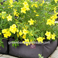 Yellow flower plant with Square living garden bag