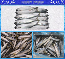 China top nice quality cheep frozen Pacific mackerel