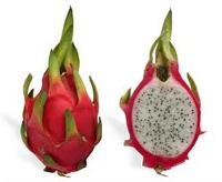 Hylocereus undatus Dragon Fruit Pitahaya Strawberry Pear