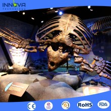 Innova-Science museum dinosaur fossils exhibit life size t-rex skeleton for sale