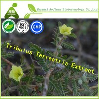 Sex Health Tribulus Terrestris 40%, 45% Saponins For Male