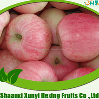 Matured apple fruits Variety and fresh fruits Type mature whole fuji apples