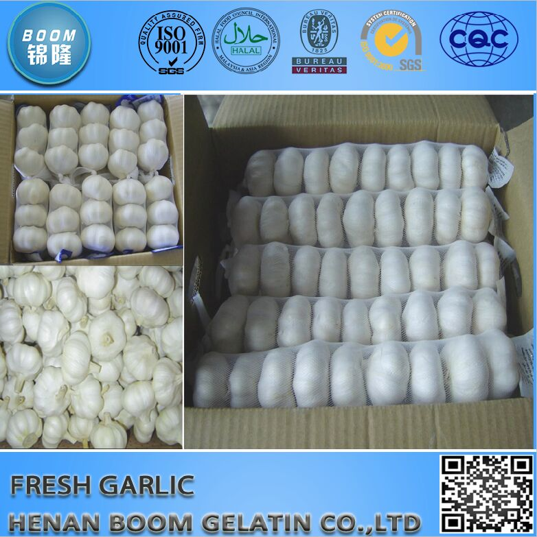 normal white fresh garlic 10kg bulk garlic paste