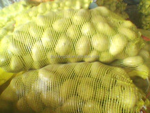 wholesale high quality fresh Holland potato supplier