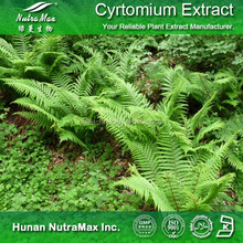 Natural Herbal Extract Pharmaceutical Raw Material Cyrtomium Rhizome Extract Dryopteris Extract Powder