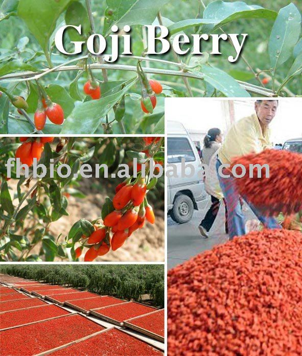 Natural Dried Wolfberry