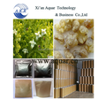 Competitive price and good quality Cartesian frankincense tree resin olive branch plants