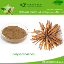 Factory supply Cordyceps militaris fruiting body Extract/cordyceps polysaccharides 50%