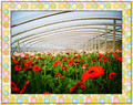 Greenhouse Film For Horticulture