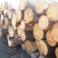 Southern Yellow Pine Logs 20 Cm