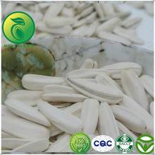Types Of Oil Seeds White Sunflower Seeds Bird Seeds