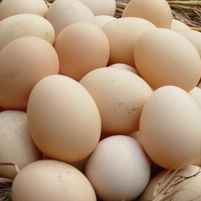 Fresh white and brown chicken eggs from China