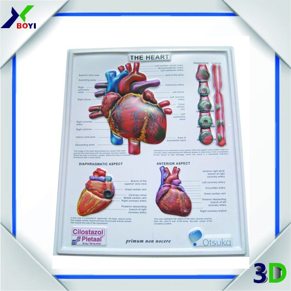 Custom 3d Medical Human Anatomy Poster For Heart Structure Buy 3d