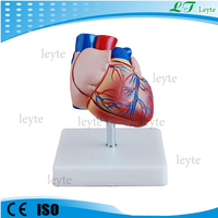 XC-307B New style plastic heart anatomical model