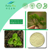 Hot sale Plant extract Herba centellae extract/Triterpenoid Glycosides extract/Centella Asiatica extract