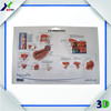 Custom Pinted Logo 3D Anatomical Chart/Body Anatomy Chart/Vacuum Formed Poster