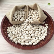 JSX round small white beans sprouting food grade export japanese white beans