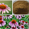 Zi Zhui Ju Bulk Supply Low Price Echinacea Purpurea Extract 2% Chicoric Acid