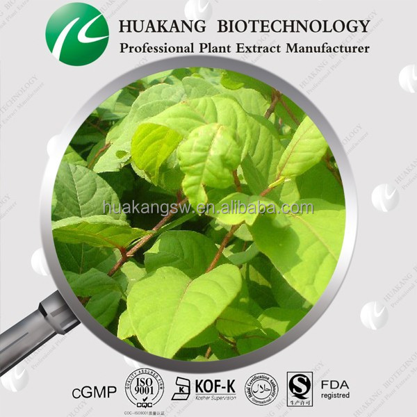 High Quality Giant Knotweed Extract 98% Resveratrol With Competitive Price