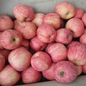 Fresh papper bagged qinguan apple fruit/fresh fruits for export